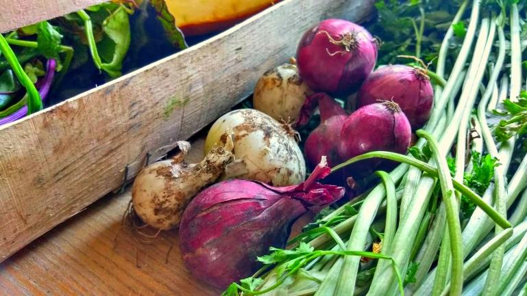 prosto-ze-wsi-warzywa-2